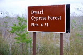 cypress  014