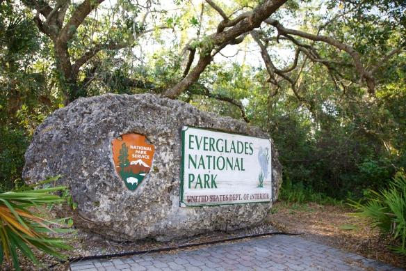 Everglades  001