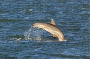 Florida Bay  002