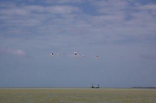 florida bay  058