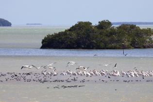 florida bay  077
