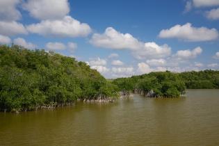 Mangroves  001