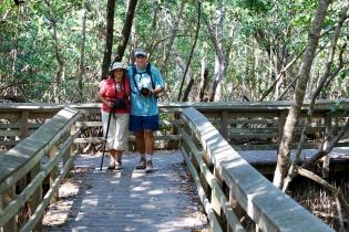 Mangroves  003
