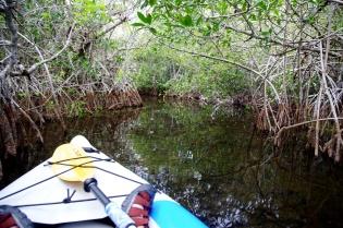 Mangroves  007