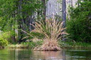 Swamp 021