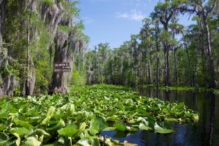 Swamp 024