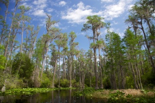 Swamp 027
