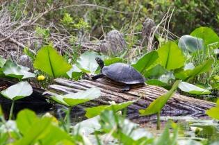 Swamp 033