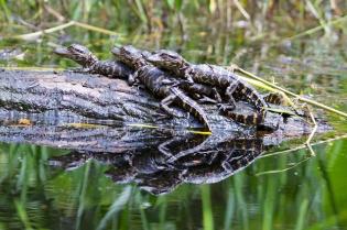 Swamp 035