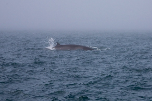 whales 26