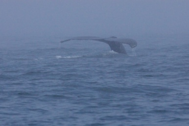 whales 35