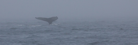 whales 41