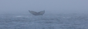 whales 42
