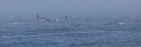 whales 43