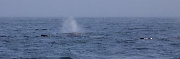 Whale's breath