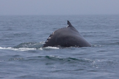 whales 49