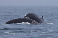 whales 51