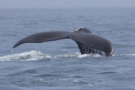 whales 53