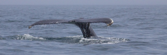 whales 62