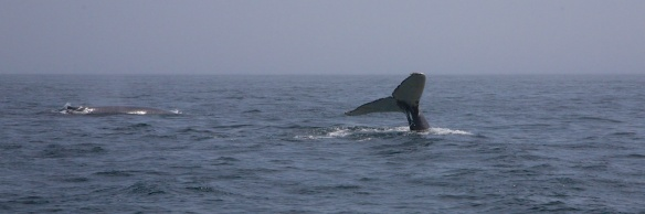 whales 68
