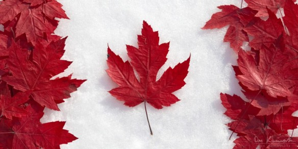 leaf_flag_1200x600_wm-1024x512