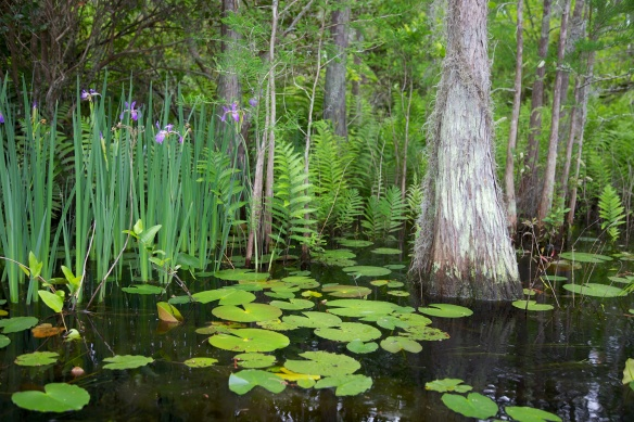 Swamp 011