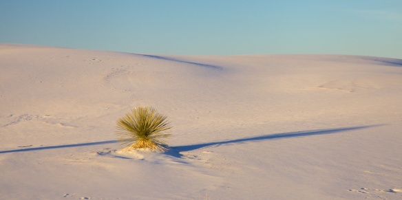 white sands  020