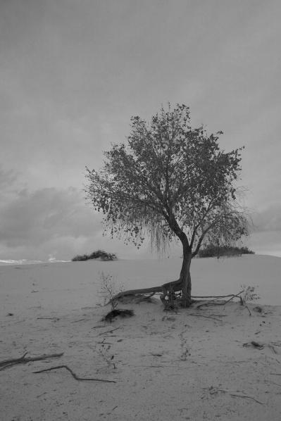 white sands  035