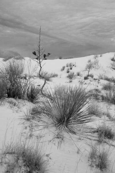 white sands  040