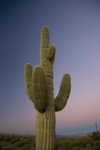 Phoenix 056