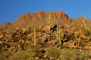 Tucson  011
