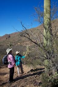 Tucson  035