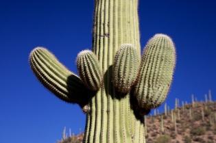 Tucson  037