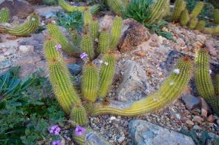 Tucson  059