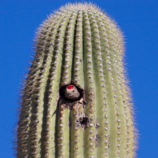 Tucson  066