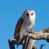 Tucson 072