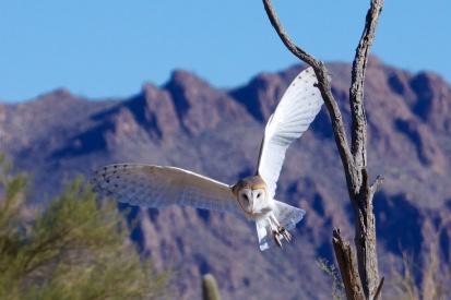 Tucson 075