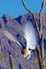 Tucson 076