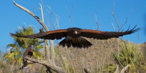 Tucson  080