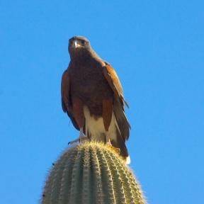 Tucson 083