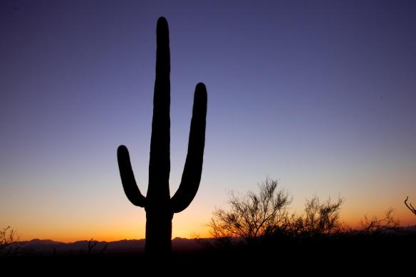 Tucson  112