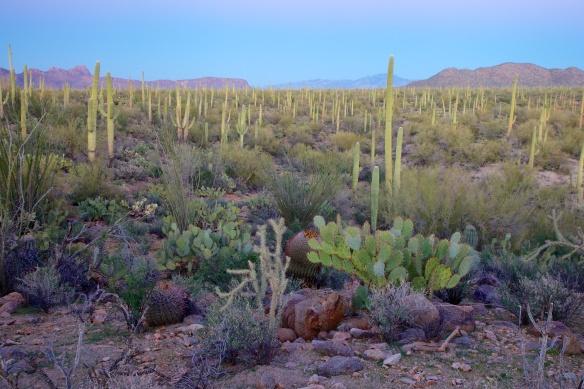 Tucson  114